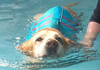 Canine Hydrothrapy Northampton Banbury Towcester