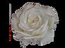rosa perla.png