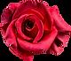 rose-1385965_640.png
