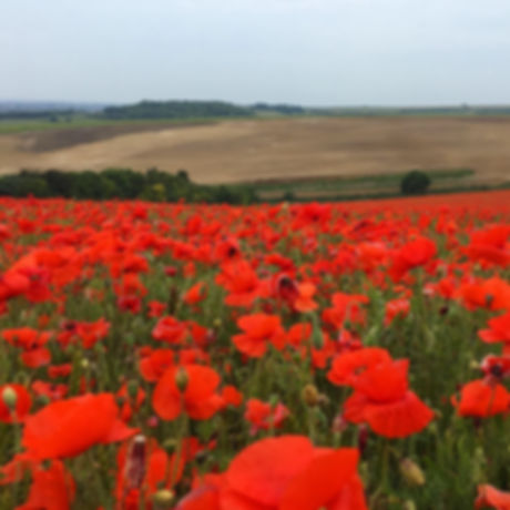 Poppy fields. Nature reserve. Walking. Lancing. Sussex. Free fun with children.