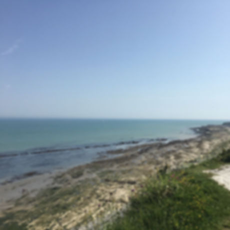 Free activities Brighton and Sussex rock pooling kids