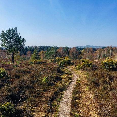 Sandy trail. Walks with the kids. Free family fun. Midhurst West Sussex. Iping Common Trail.