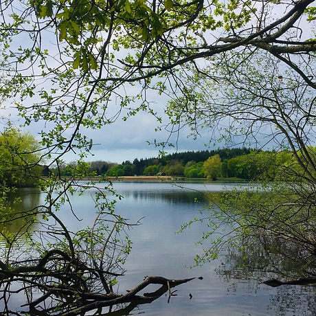 Family adventure. Walking with kids. Brede High Woods near Battle East Sussex. Reservoir views