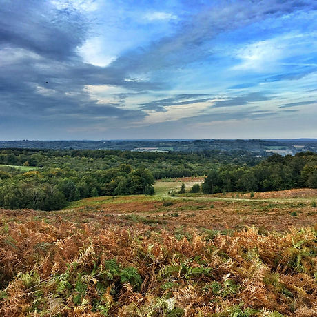 Ashdown Forest. Country Park. Best walk Sussex. Winnie the Pooh. Great views