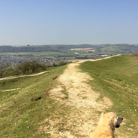 Free family adventure. National Trust. Cissbury Ring Worthing. West Sussex. Horses. Great views. Child-friendly walking.