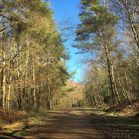 Free day out. St Leonard's Forest. Horsham, West Sussex. Walking and cycling with the kids.