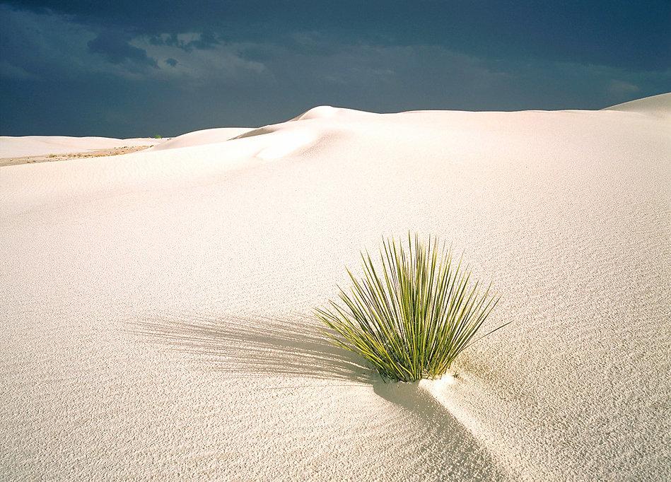 Pflanze in weissem Sand2.JPG