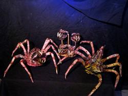SPIDER BRAIN QUEEN AND SPIDER BRAIN