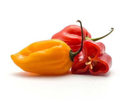 Two Habanero chili red and orange with a