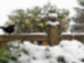 Winterbild von Bernd 2017 (2).jpg