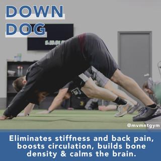 MVMNT_Down Dog.jpg