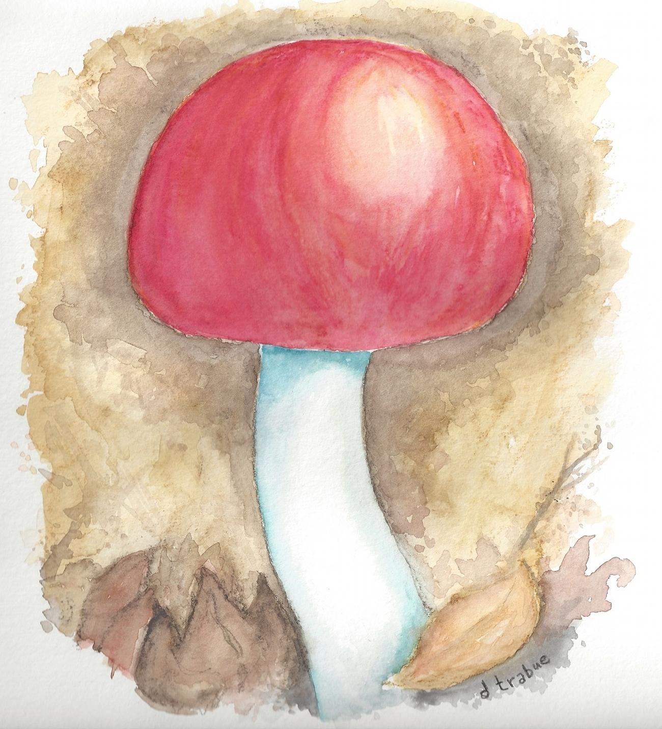 Mushroom1a