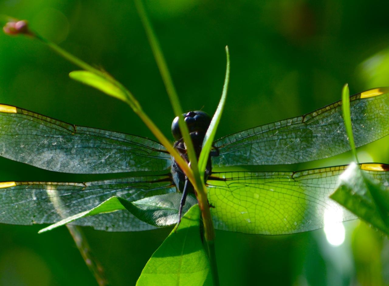 07_dragonfly