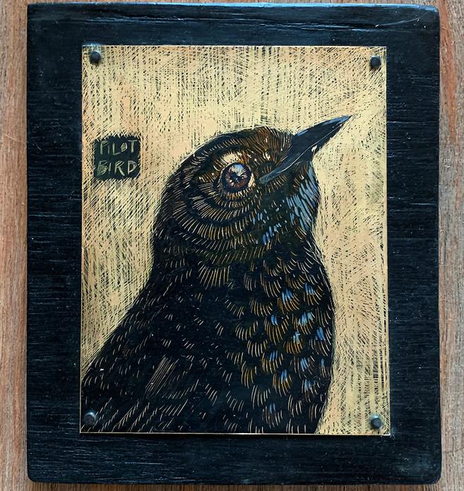 pilotbird-smallbirdofblackheath.jpg