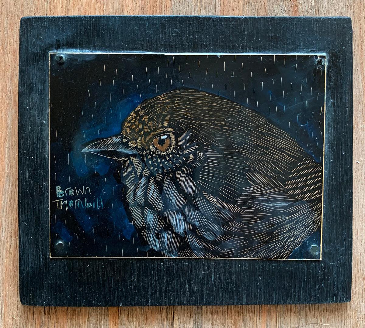 Brown-thornbill-smallbirdofblackheath.jp
