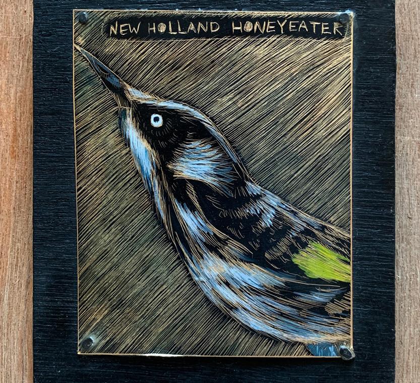 New-Holland-Honeyeater.jpg
