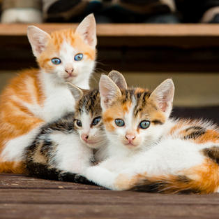 volunteer to play with kittens at your local humane society!