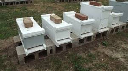 Nucleus Hives and Summer Management Workshop