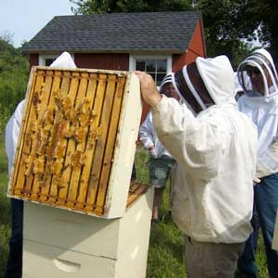 VIRTUAL Nucleus Hives and Summer Management Workshop