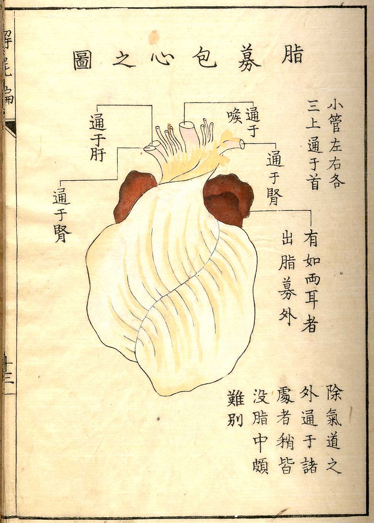 A woodcut iIllustration from the anatomical atlas during the dawn of experimental medicine in Edo-period, Japan. Published in Kyoto in 1772 where many people with no medical background, including doctors not specialized in surgery began to practice surgical methods. Because of this, surgeons were considered of low standing amongst physicians in Edo Japan.