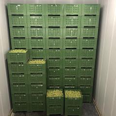 Box jabuka