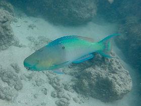 hanauma-snorkel2.jpg