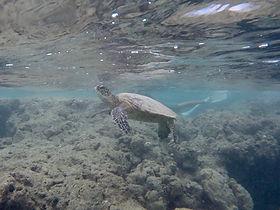 hanauma-snorkel3.jpg