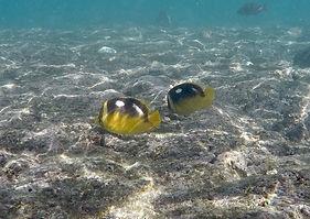 hanauma-snorkel4.jpg