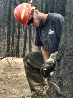 Post Wildfire Tree Removal