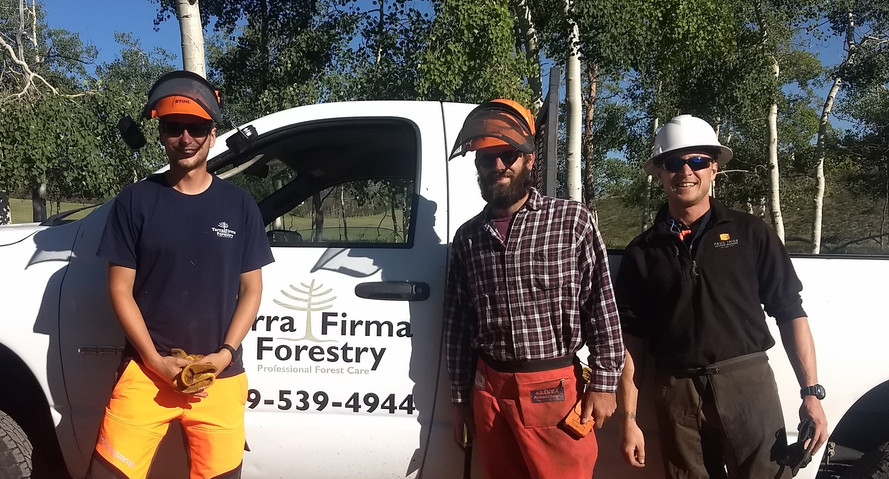 Professional Foresters and Arborists