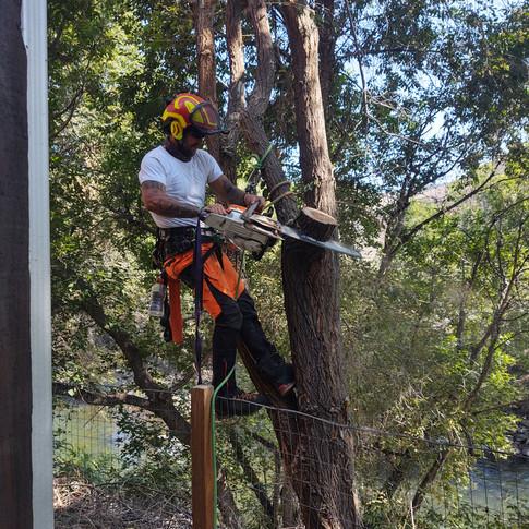 Trained Tree Care Climbers