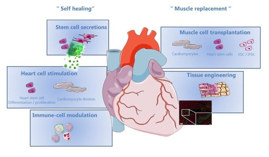 Empowering-cardiac-cell-therapy_edited.jpg