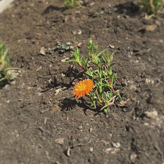 Flores de nuestro jardín