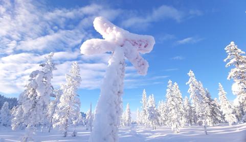 winter trail in the area.jpg