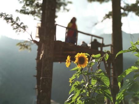 Machan-with-Sunflower.jpg