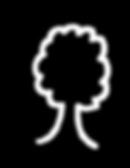 l'arbre_blanc_notre_allié_agroforesterie
