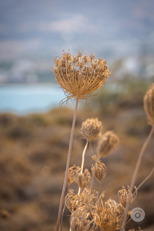 Ilha de Paros