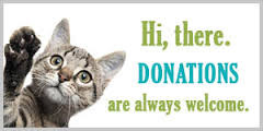 Help The Kitties