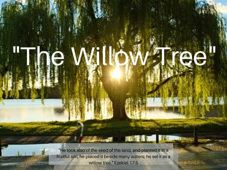 """""""The Willow Tree"""""""