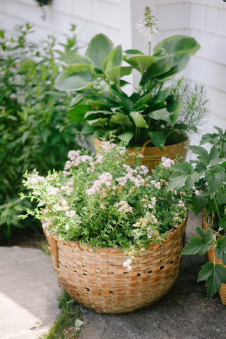 potted-plants-wedding-deco-storied-events.jpg