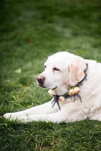 storied-events-wedding-dogs.jpg