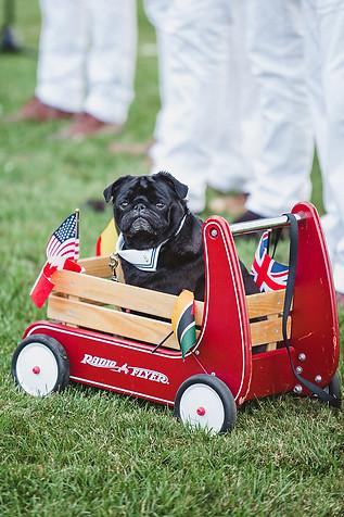 dogs-wedding-party.jpg