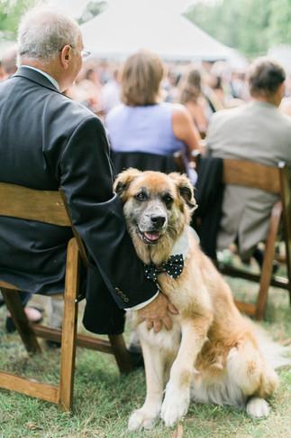dogs-at-weddings.jpg