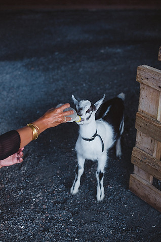 petting-zoo-at-wedding.jpg