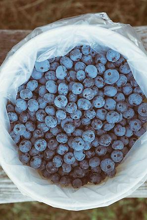 berries-blueberries-blurred-background-c