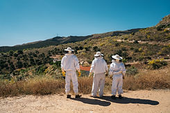 Three back beekeepers in protective work