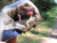 Rūsganais vakarsikspānis (Nycalus noctula)