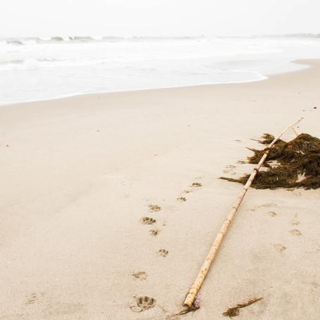 Beaches & Bamboo