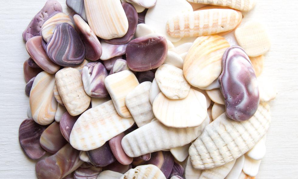 Japanese Shell Shards