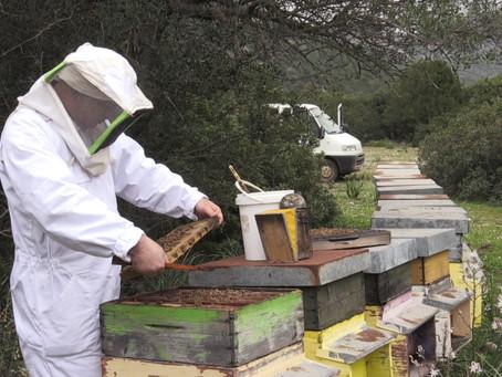 Mio papà fa l'apicoltore!